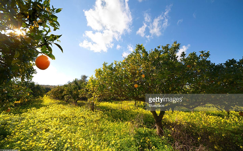 Spaanse oogst in de startblokken